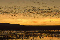 Dawn Movement